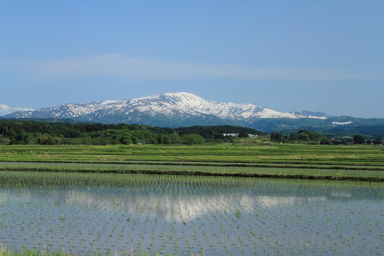 日本酒オンラインツアー