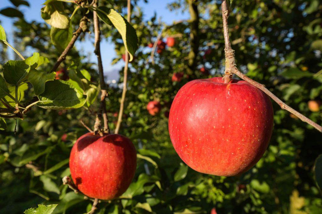 地域応援オンラインツアーりんご