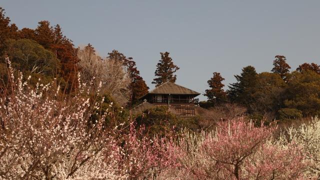 JapanWonderGuide庭園3